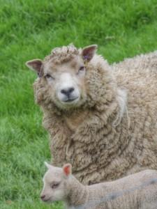 Here's looking at ewe...