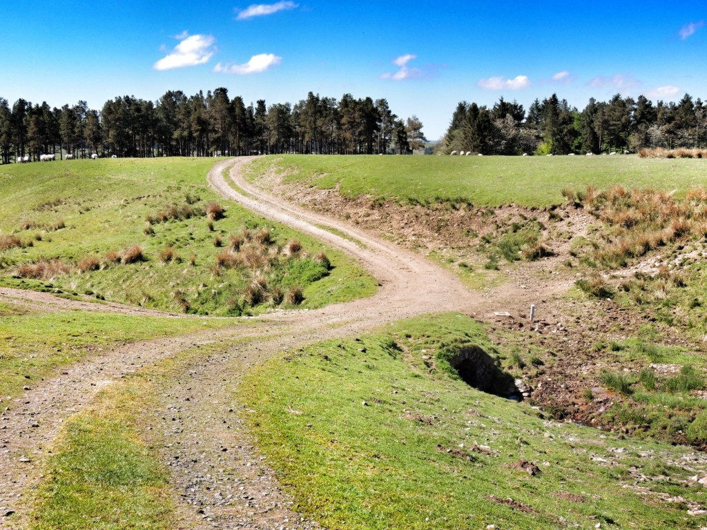 The road meandered through a sheep field